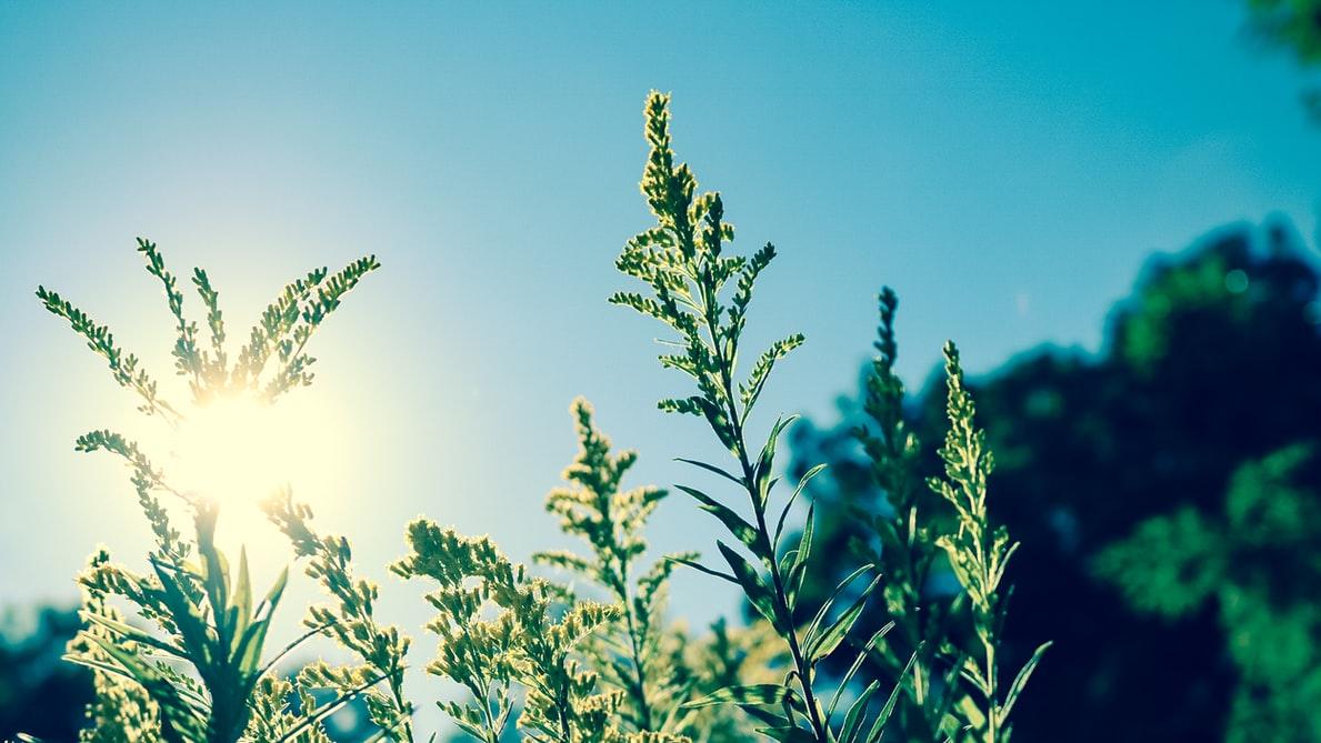 関西の暑さいつまで続く?2021猛暑のピークや涼しくなるのはいつからか調査