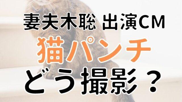妻夫木聡が出演のCMの猫パンチはどう撮影?監督の無茶ぶりとは!?
